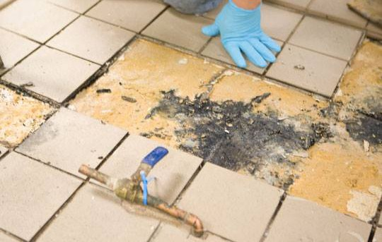 It is not uncommon to find bacteria and mold growing under floors.
